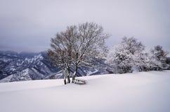 Snow och tree Arkivbilder
