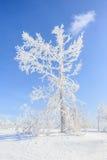 Snow och trees Royaltyfria Foton