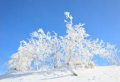 Snow och trees Royaltyfri Foto