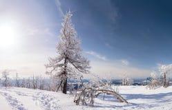 Snow och trees Arkivbilder