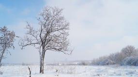 Snow och trees Arkivfoto