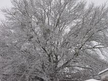 Snow out the backdoor. Snow everywhere:  on the house, on the ground, on the trees Stock Image
