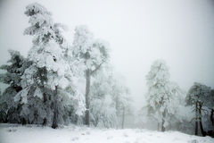 Snow outside Stock Images