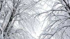Snow over branches stock footage