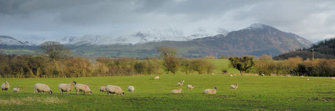 Snow over Skiddaw. Early Spring in the Lake District - UK Stock Photos