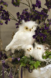 Snow owl Royalty Free Stock Images