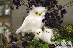 Snow owl Royalty Free Stock Photos