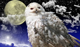 Snow owl and night sky. With moon,stars,space nebula and clouds Stock Images
