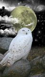 Snow owl and night sky. With moon,stars,space nebula and clouds Royalty Free Stock Photo