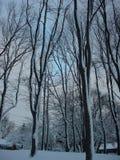 Snow på gryning Arkivfoto