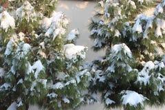 Snow på trees Royaltyfri Fotografi