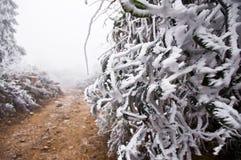 Snow på vägen efter stor snow Fotografering för Bildbyråer