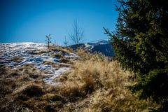 Snow Paltinis. Snow on dry grass, in Paltinis, Sibiu, Romania Royalty Free Stock Images