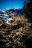 Snow Paltinis. Snow on dry grass, in Paltinis, Sibiu, Romania Stock Photo