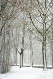 Snow in the park Stock Photos