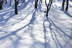 Snow in the park bright sunny happy winter day. There are shadows of trees on the snow. royalty free stock images