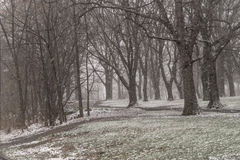 Snow in the park Royalty Free Stock Photos