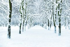 Snow park with white trees. On central alley Royalty Free Stock Photography