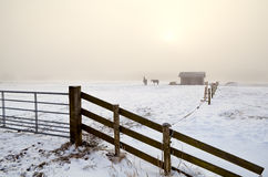 Snow pasture in dense fog Royalty Free Stock Image