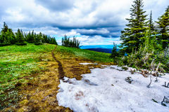 Snow Patch in Summer in an Alpine Meadow Stock Image