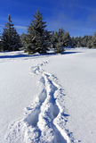 Snow path in forest Stock Images