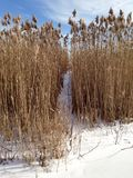 Snow path in grasses Royalty Free Stock Images