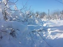 Snow path Royalty Free Stock Image