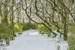 Snow path Stock Photo
