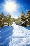 Snow path in snowy mountain forest Royalty Free Stock Photo