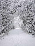Snow Path royalty free stock photo
