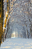 Snow path in winter forest Royalty Free Stock Photography