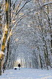 Snow path in winter forest. Trees covered by snow and a path after a snowfall and a man walking with his dog Royalty Free Stock Photos