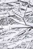 Snow Patterns on Trees. Patterns formed by tree branches under blanket of fresh snow royalty free stock photo