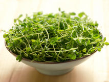 Snow pea shoots Stock Photo