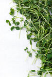 Snow Pea Shoots Or Sprouts On White With Copy Space Stock Photo