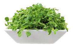 Snow Pea Sprouts Royalty Free Stock Image