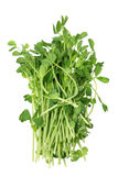 Snow Pea Sprouts. On White Background Royalty Free Stock Images