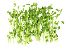 Snow Pea Sprouts Stock Photos
