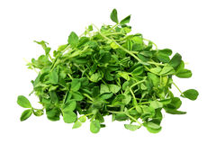 Snow Pea Sprouts Stock Image