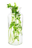 Snow Pea Sprouts Royalty Free Stock Photo