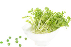Snow Pea Sprouts with green pea Stock Photo