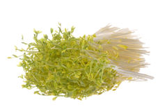 Snow Pea Sprouts Isolated Stock Photo