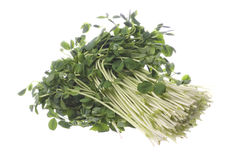 Snow Pea Sprouts Isolated Royalty Free Stock Photos