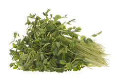 Snow Pea Sprouts Isolated Stock Image