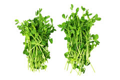 Snow Pea Sprouts. On Isolated White Background Royalty Free Stock Photos