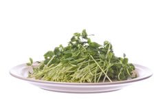 Snow Pea Sprouts on Plate Isolated Royalty Free Stock Photography