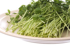 Snow Pea Sprouts on Plate Isolated Royalty Free Stock Photos