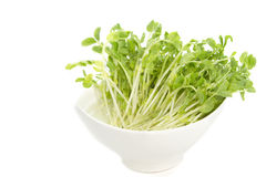 Snow Pea Sprouts in white bowl Stock Photo