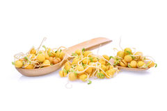 Snow pea sprouts in wooden spoon isolated on white. Background Royalty Free Stock Photo