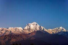 Snow Peak of Dhaulagiri Mountain at Sunset in the Himalayas in Nepal.  stock photos